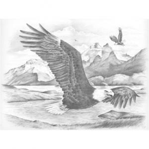 Набор для раскрашивания по номерам Парящий орел Reeves