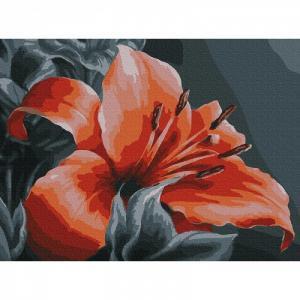 Картина по номерам Оранжевая лилия 30х40 см Molly