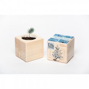 Набор для выращивания Голубая ель, Экокуб