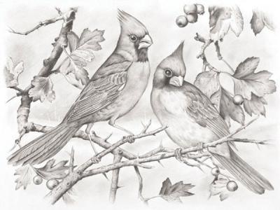 Набор с гарфическими карандашами Птицы Reeves